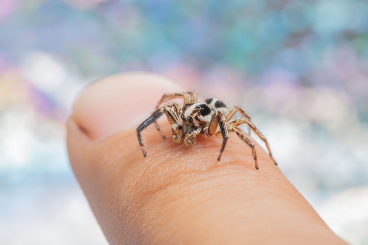 Close-Up Of Spider On Human Finger