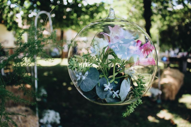 Wedding Decoration Transparent Focus On Foreground Close-up Glass - Material Plant Reflection Day Sphere