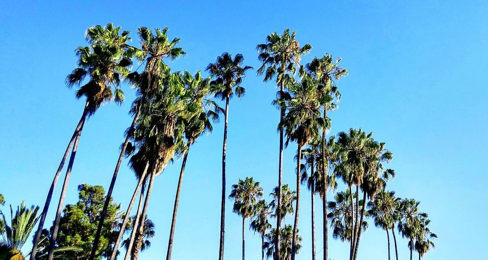 Palm Trees From My Point Of View Reaching For The Sky Enjoying The Sun At The Park The Artsy Lens Tree Photography The Essence Of Summer
