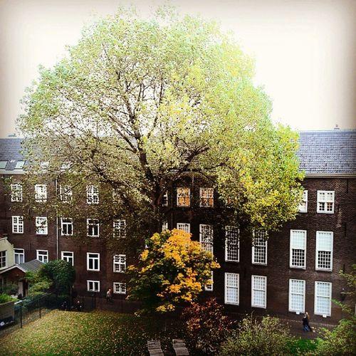 Boom bij de Burcht Leiden Historicleiden Tree
