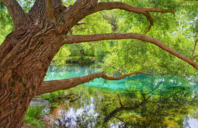 The tree is the river. L'albero e il fiume. Beauty In Nature Branch Day EyeEm Best Shots EyeEm Nature Lover Forest Green Green Color Growth Idyllic Lake Lush Foliage Nature Non-urban Scene Outdoors Reflection Scenics Showcase April Standing Water Tranquil Scene Tranquility Tree Tree Trunk Water WoodLand
