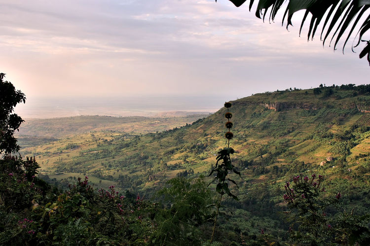 sipifalls Hochlato Cliff Colorful Exploring Exploring Feld Geology Green Hiking How Do We Build The World? Labor Landcape Mbale Mountain Mountain Range No Animals No People Spetacular Sun Set Sunny Day Tropical Climate Uganda  Urban Wet Season Yellow