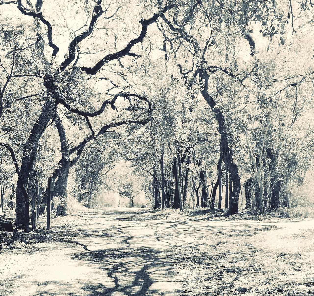 tree, nature, beauty in nature, tree trunk, tranquility, scenics, landscape, tranquil scene, forest, outdoors, bare tree, branch, road, no people, day