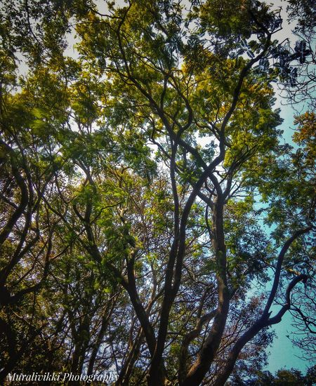 Trees And Sky Tree Area Trees_collection Tree Of Life Longtrees Branches Of Tree Branches ❤ Eyemgallery Eyeem Photography EyeEm Team Potrait_photography Potraitmood