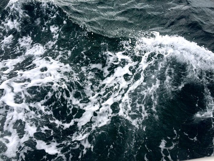 Marine Mediterranean  Sea 🌊