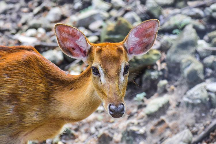 Close-up of deer on rock