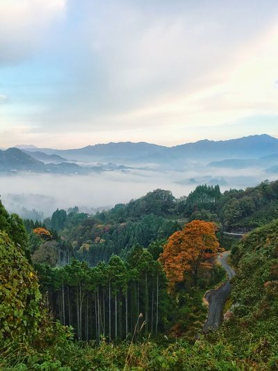 Beauty In Nature Mountain Landscape Tree Fog Outdoors Iphonegrapher Autumn