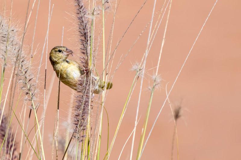 Close-up of bird on spider web