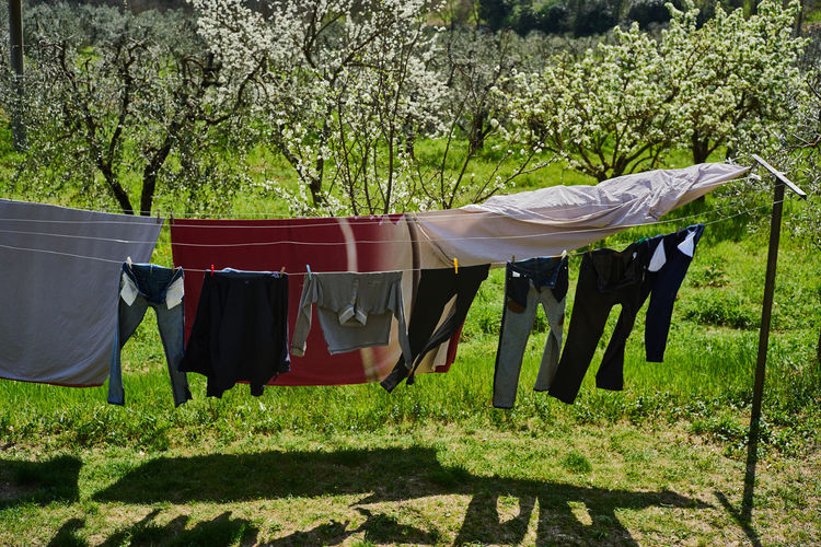 Chianti Chores Clothesline Clothing Day Drying Freshness Hanging Laundry Nature No People Outdoors Toscana Tree Millennial Pink