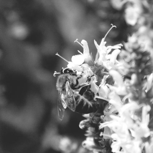 Black & White RePicture Love Macro EyeEm Nature Lover