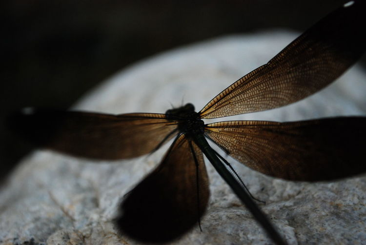 Animals In The Wild Butterfly - Insect Close-up Closeup Dragonfly Insect Nature One Animal