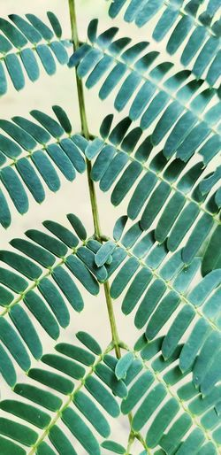 Mimosa Abstract Eyeemmarket Eyeem Market On Market Abstract Abstract Photography Abstract Backgrounds Abstract Nature Outdoor Photography Outdoors Leaf Backgrounds Full Frame Frond Pattern Close-up Plant Green Color Leaf Vein Plant Life Natural Pattern Green Young Plant Countryside Greenery Botany Leaves