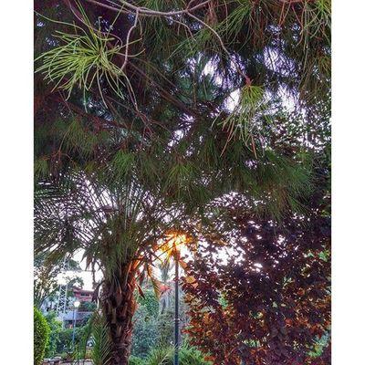 тоже осень, как ни странно осень парк вечер флораифауна фотоохота подороге случайныйкадр простотак прогулкасхорошимчеловеком autumn world_best park tree street world_beststreet evening myisrael instaisrael instaphoto instagram_israel instagram_israel_ holon japanesepark picoftheday
