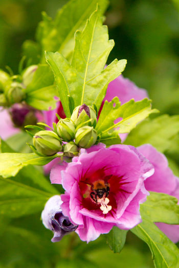 Bumblebee in flower Animal Themes Animals In The Wild Beauty In Nature Bumblebee Flower Flower Head Insect Nature One Animal Plant