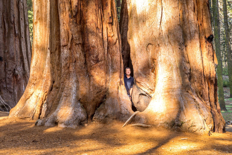 California National Park Sequoia Sequoia National Park Tree USA Adult Casual Clothing Contemplation Day Forest Front View Full Length Hairstyle Land Leisure Activity Nature One Person Outdoors Plant Standing Tree Tree Trunk Trunk Young Adult