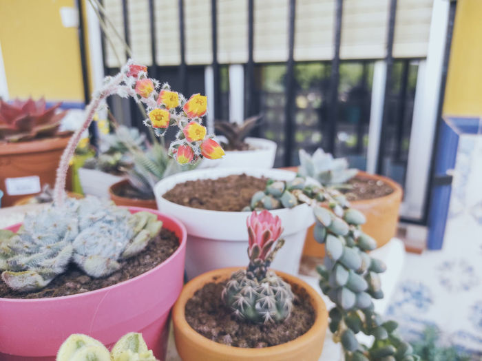 Close-up of potted plants on table