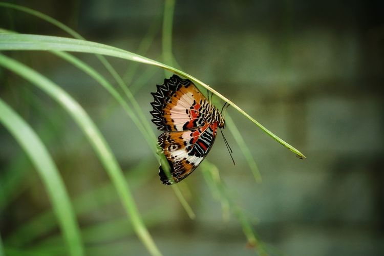 Butterfly Philippines Photos Bohol Island Bohol Philippines Bohol Travel Light And Shadow Tranquil Scene Streamzoofamily Animal Wildlife Bohol Adventure Butterfly - Insect Full Length Insect Leaf Animal Themes Close-up Animal Wing Symbiotic Relationship Butterfly Animal Antenna
