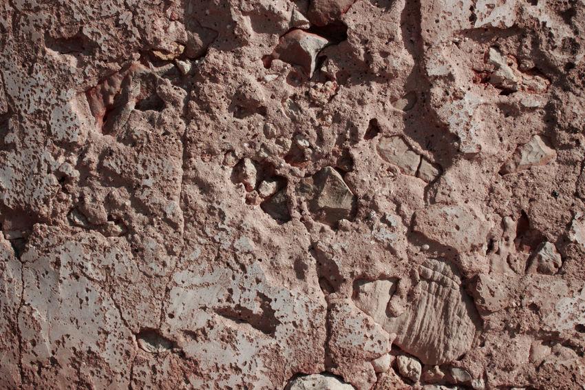 Ancient Animals Surface Taipa  Texture Wall Water