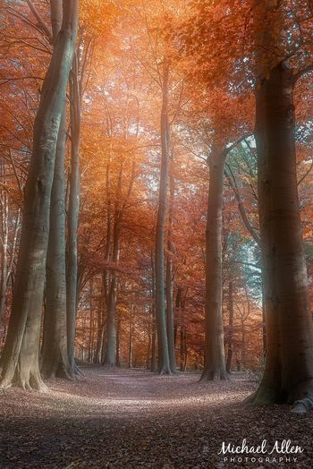 Walking in Lochem Autumn Nature Tree Plant No People Sunlight Day Beauty In Nature Orange Color Outdoors Forest Leaf Tree Trunk Landscape Tranquility