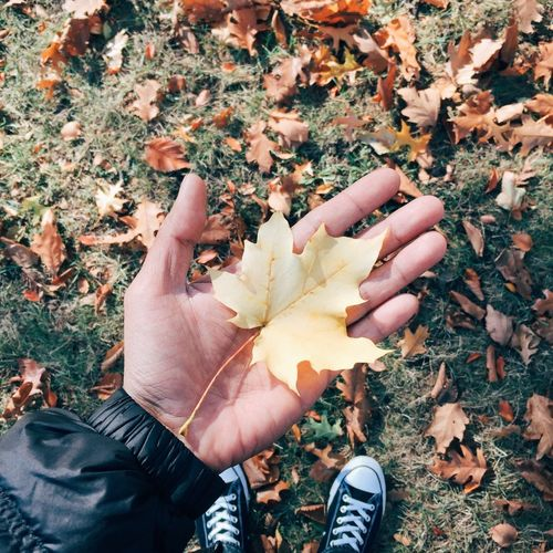Autumn Leaves Change Nature Personal Perspective Maple Leaf Human Hand Outdoors