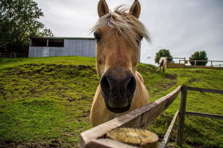 """Close up with """"Sammy"""" the horse Animal Beautification Brown Close-up Domestic Animals Equestrian Eye Eyelashes Farm Hair HEAD Horse Mammal Mane Nature Nose Orange Outdoors Pasture Pet Pony Portait Sky Stable Stallion"""