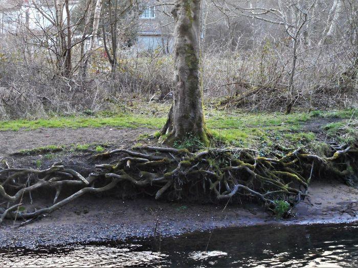 Tree Water No