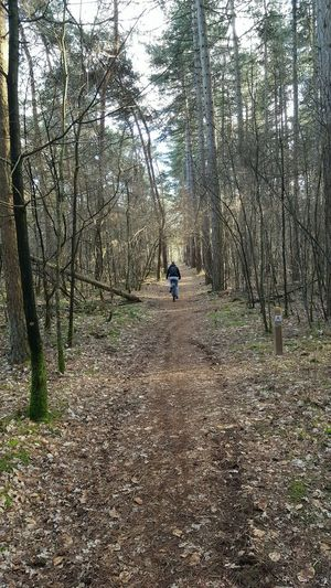 his path Bike Bicycle Forest Riding Bike Man Path Path In Nature Pathway In The Forest