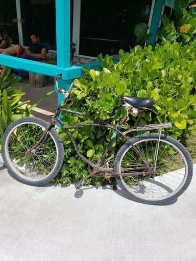 Bicycle parked by plants in city