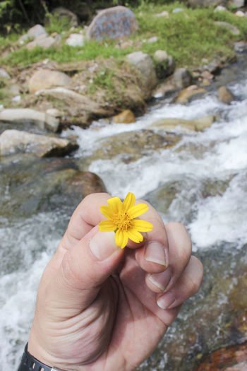 Beauty In Nature Close-up Day Flower Flower Head Focus On Foreground Fragility Freshness Hand Holding Flower Holding Human Body Part Human Hand Leisure Activity Lifestyles Nature One Person Outdoors People Real People Water Yellow Flower