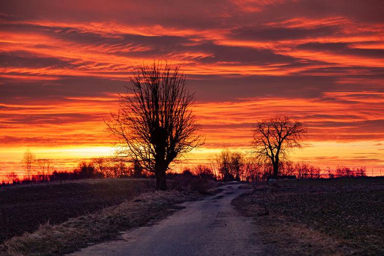 Road amidst trees on field against orange sky