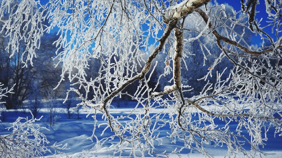 雾凇之美 冬天的童话 Soft Rime 塞罕坝 Winter Blue Snow Beauty In Nature Ice