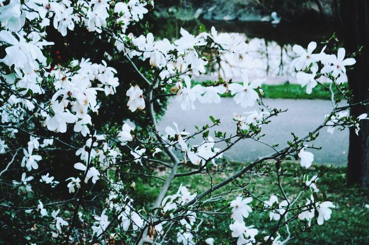 Plant Growth Flowering Plant Flower Fragility Vulnerability  Day Beauty In Nature Nature Outdoors