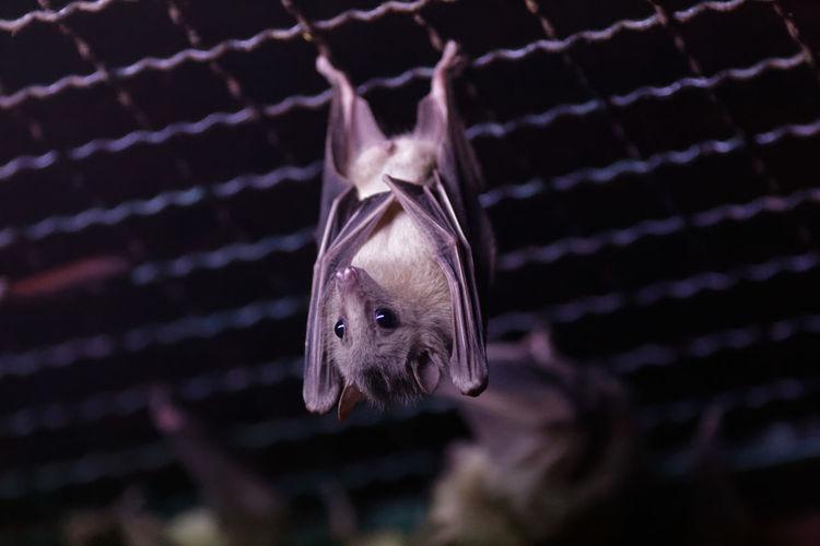 Close-up of batman