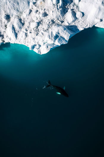 Water Sea Underwater Beauty In Nature Swimming Animals In The Wild Mountain Nature Animal Themes Animal Scenics - Nature Animal Wildlife Sea Life Cold Temperature Day UnderSea Snow No People One Animal Marine Ice Outdoors Whale Minimalism The Week On EyeEm Editor's Picks
