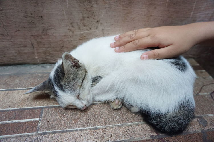 High angle view of hand touching cat
