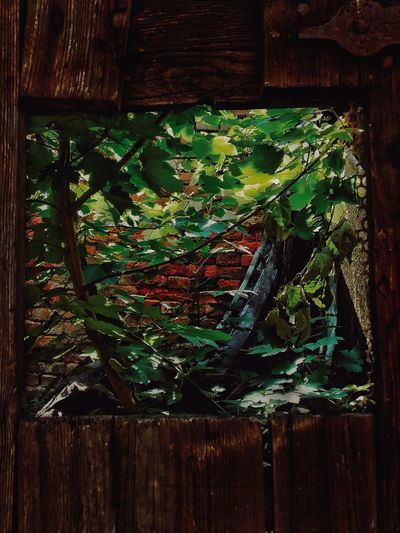 Ruin Tree Wood