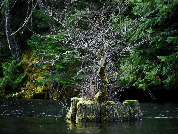 Tree Water Nature Forest Outdoors Growth Beauty In Nature River Plant No People Landscape Scenics Reflection Lake Day Waterfall Tree Area Chance Encounters Outside Photography Beauty In Nature Tree Plant Trees Lake Lakeshore Water_collection