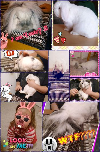 we ♡ Bunnys PicCollage  Pets