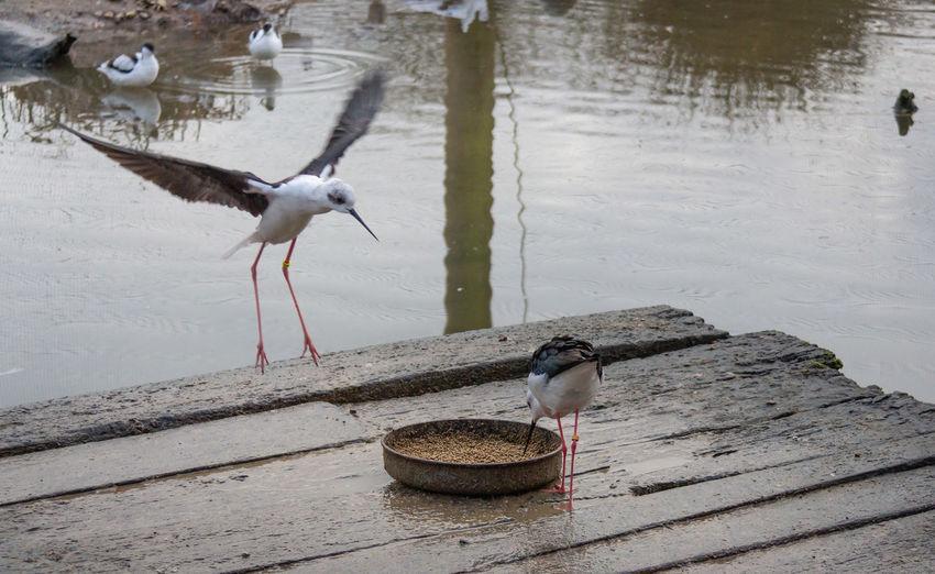Bird Animal Day No People Animal Wildlife Water Vertebrate Two Animals Flying