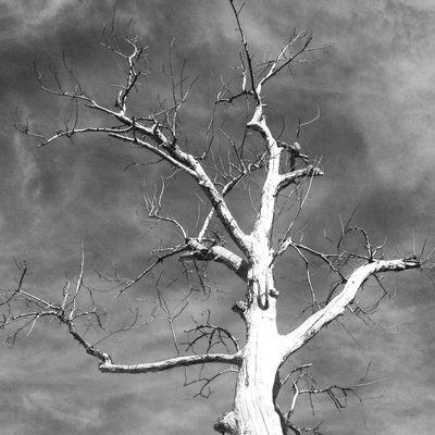beautifully bare. yosemite, ca. Trees TreePorn Nature Blackandwhite