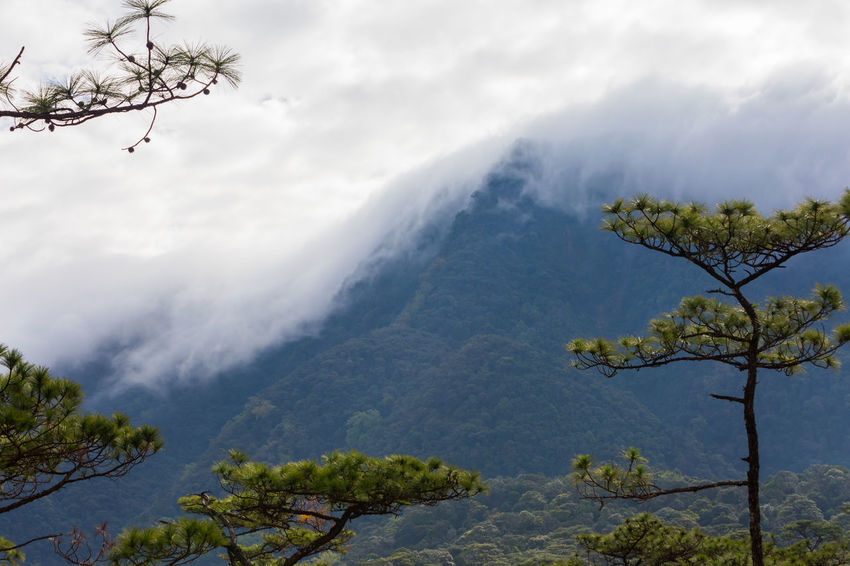 The mountain is covered with fog Cloud Field Pine Tree Beauty In Nature Branch Day Fog Forest Freshness Growth Landscape Meadow Mist Mountain Mountain Range Nature No People Outdoors Plant Scenics Sky Tranquil Scene Tranquility Tree
