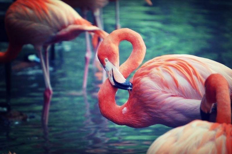 still standing Schattenspiel  EyeEm Nature Lover Eyeem Fauna @EyeEm EyeEm Birds