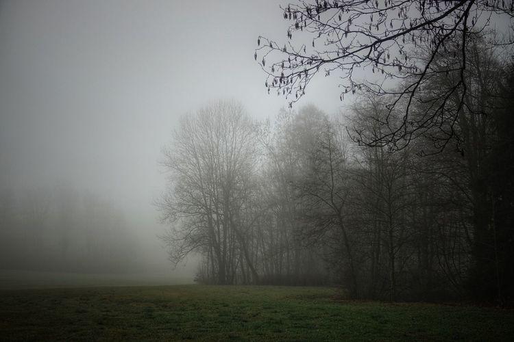 Wiese mit Nebel