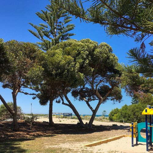 Shoalwater Islands Marine Park — Rockingham, Western Australia. Travel Destination Shoalwater Islands Marine Park Rockingham Western Australia October 2016 Summertime Sunny Sea Sand Play Ground No People Tree Day Nature Growth Outdoors Sunlight Beauty In Nature Tree Trunk Branch Shadow Scenics Blue Sky