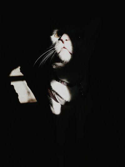 Dark cat. Cat