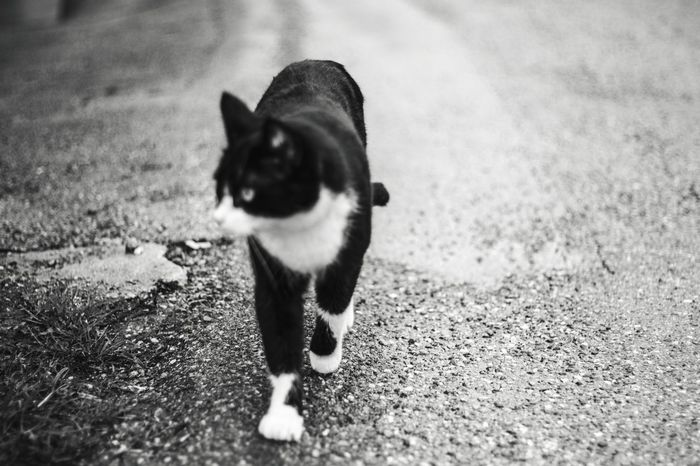 Blurry One Animal Animal Themes Animal Domestic Pets Mammal Domestic Animals No People Small City Nature Animal Body Part Domestic Cat Looking Street Cat Day
