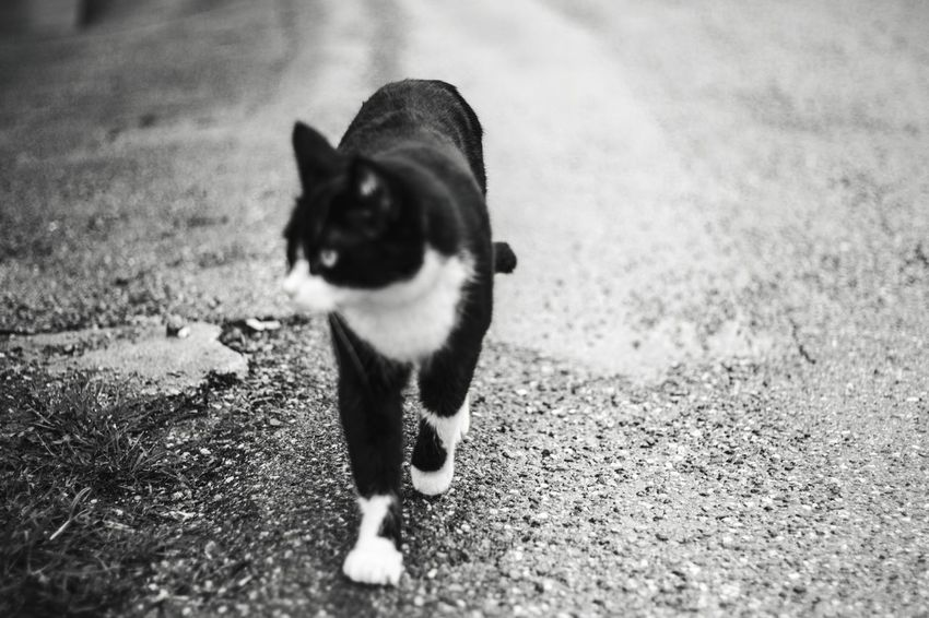 Blurry One Animal Animal Themes Animal Domestic Pets Mammal Domestic Animals No People Small City Nature Animal Body Part Domestic Cat Looking Street Cat Day Summer Exploratorium Visual Creativity The Street Photographer - 2018 EyeEm Awards