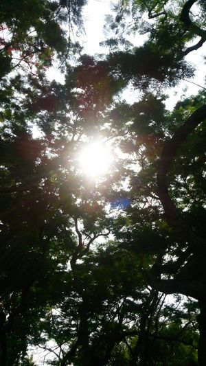 Light 樹木 Nature Plant 夏天 Tree Forest Branch Sunlight Sky Sun Growing Scenics Treetop Plant Life