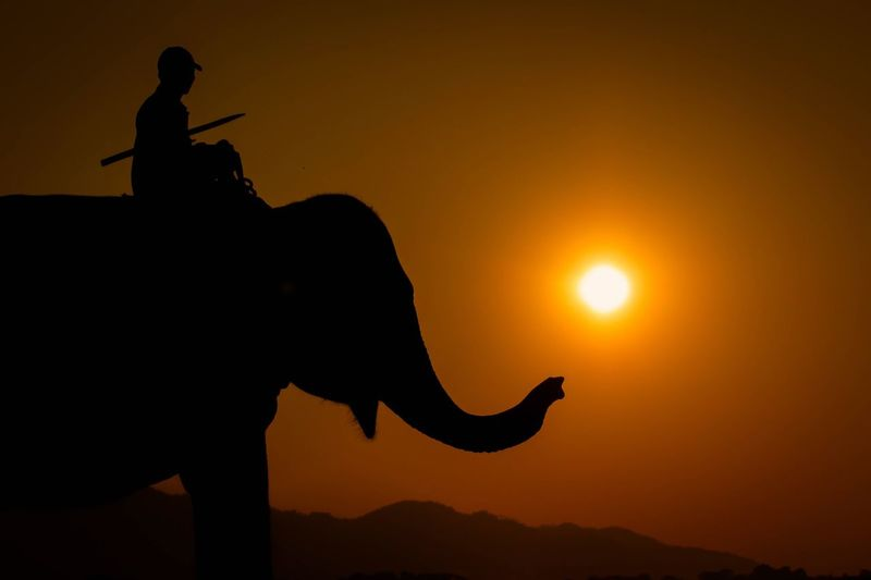 Sunset Elephant Kaziranga National Park Beauty In Nature One Animal Sun Standing Orange Color Nature Person Mountain Outdoors Scenics
