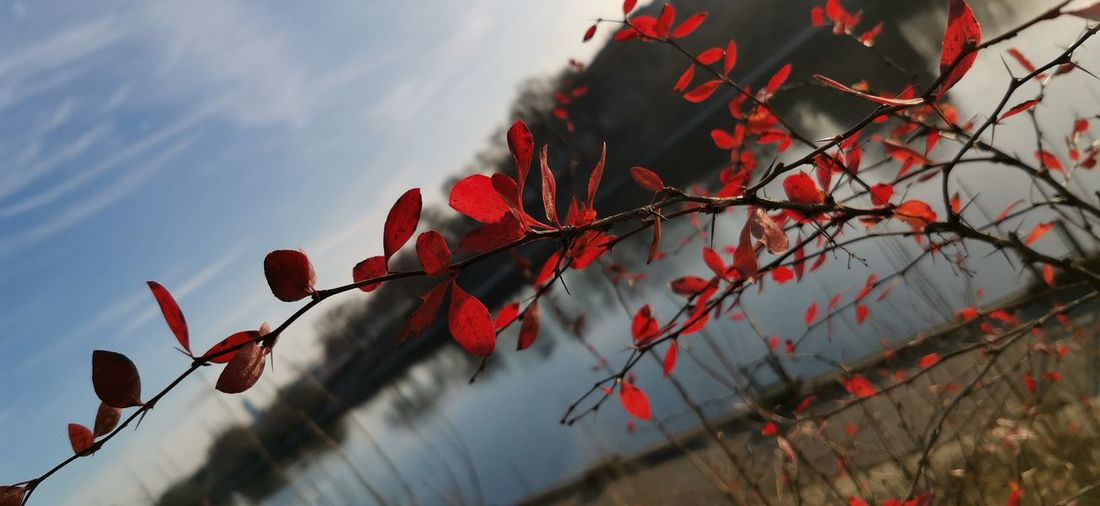 Low angle view of red plant against sky